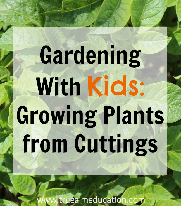 growing plants from cuttings