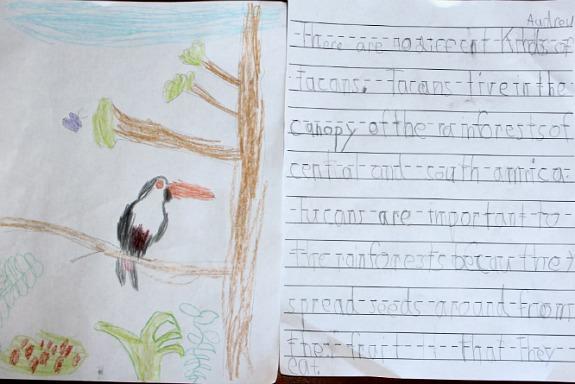 rainforest online homeschool class
