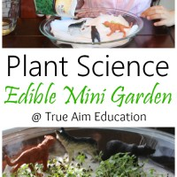 Plant Science: Edible Mini Garden