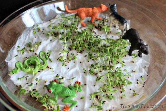 plant science edible mini garden