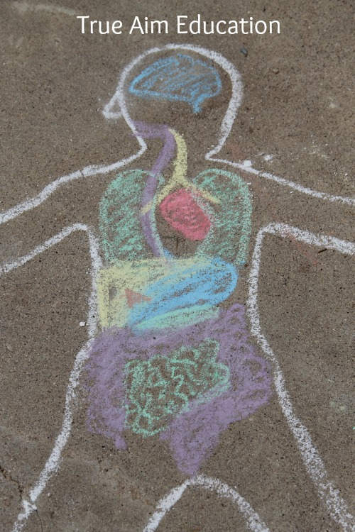Preschool Kindergarten Anatomy Activity
