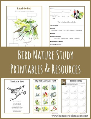 Bird-Nature-Study-Printables-from-Homeschool-Creations