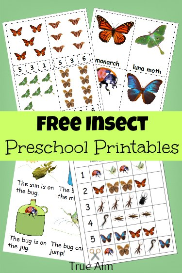 picture about Insect Printable named Free of charge Preschool Printables: Insect Mini Pack Real Emphasis