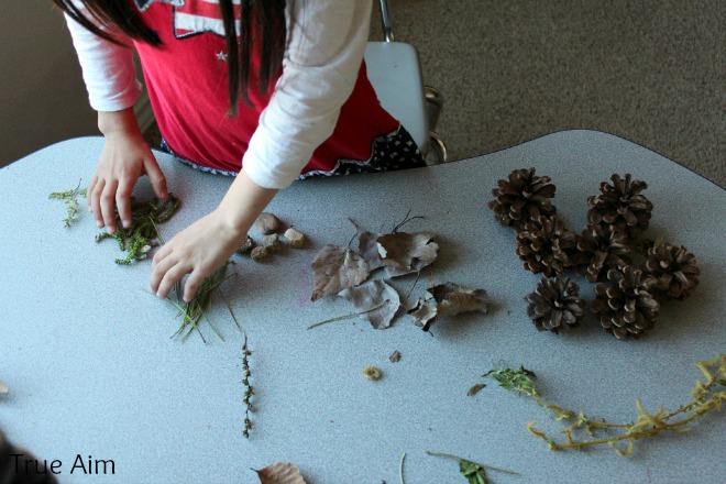 sorting leaves science project