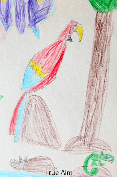 Art for kids-how to draw a parrot. 2 ways to draw a parrot using simple shapes and curves