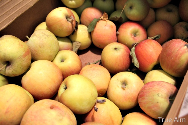 lots of apples for apple butter