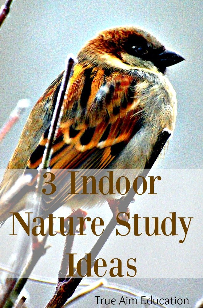 It gets cold in the winter. I don't know about you, but the last thing I want to do is head outside for nature study. As a result it gets skipped week after week. Instead of waiting until spring, try one of these indoor nature study ideas.
