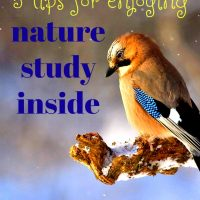 5 Tips for an Epic Indoor Nature Study