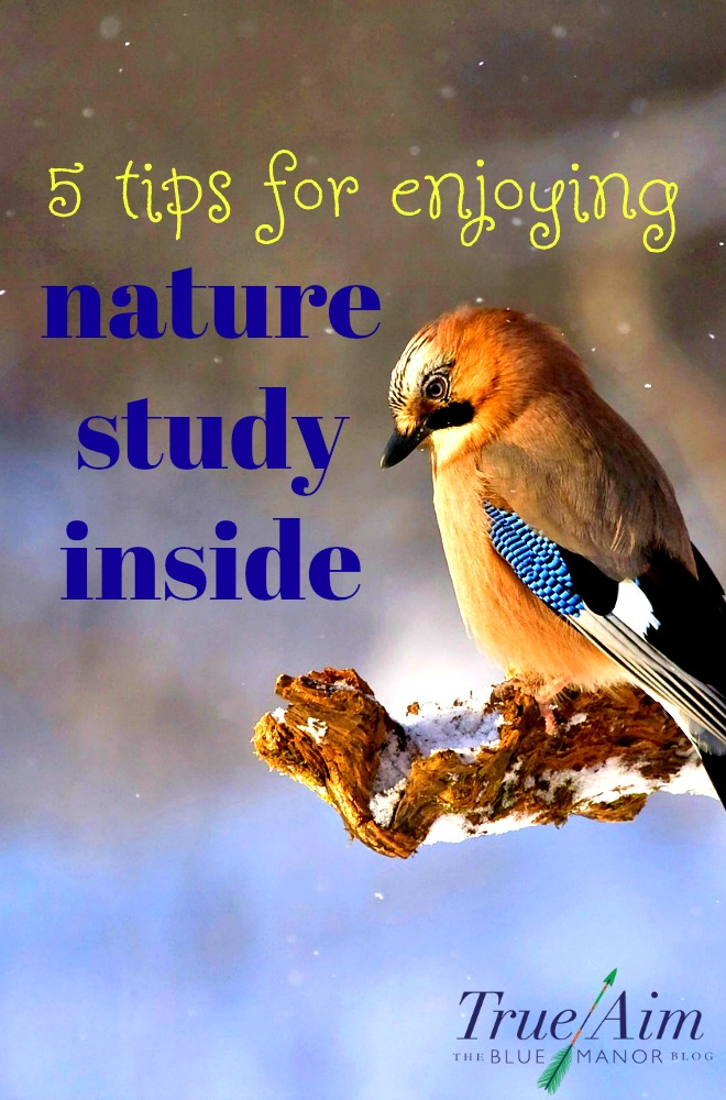 During the cold season, enjoy an epic indoor nature study during the winter!